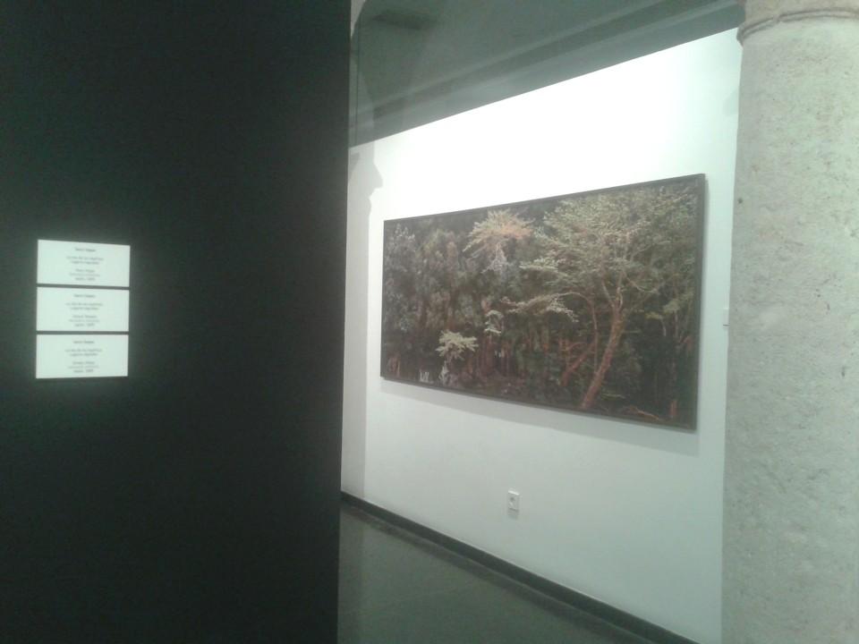 Fotografía de sostenibilidad en el bosque
